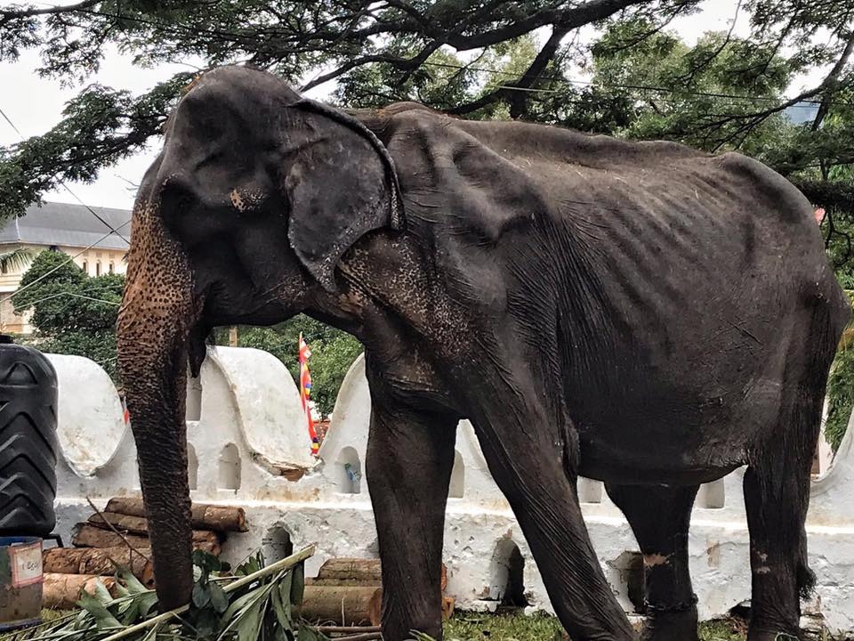 elefantes-sri-lanka-maltrato