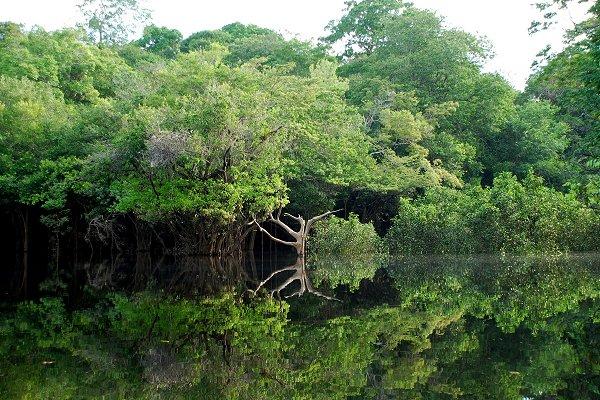 Selva amazónica-Amazonas-Brasil-Amazonía-Bolsonaro
