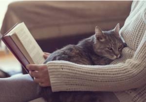 Científicos crean una vacuna contra las alergias a los gatos