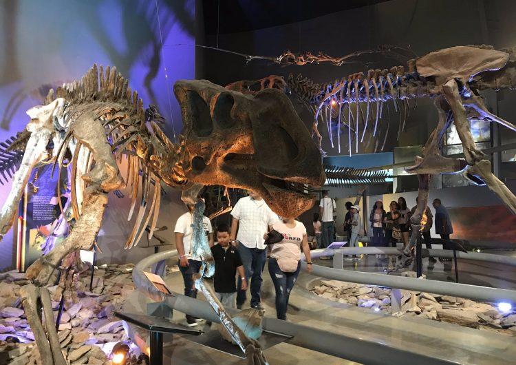 """Nuevos fósiles """"gigantes"""" son hallados en Coahuila"""