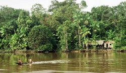 Cinco cosas a saber sobre la selva del Amazonas