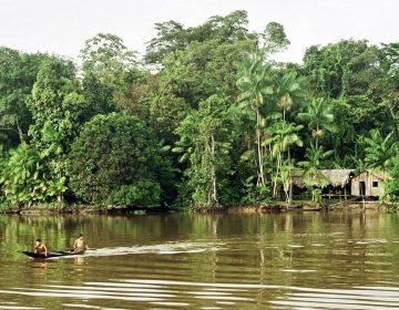 Cinco cosas a saber sobre la selva de la Amazonia