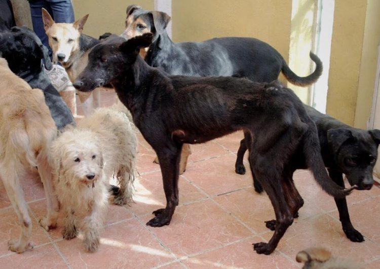 Las leyes contra maltrato animal están mal hechas: Amigos Pro Animal