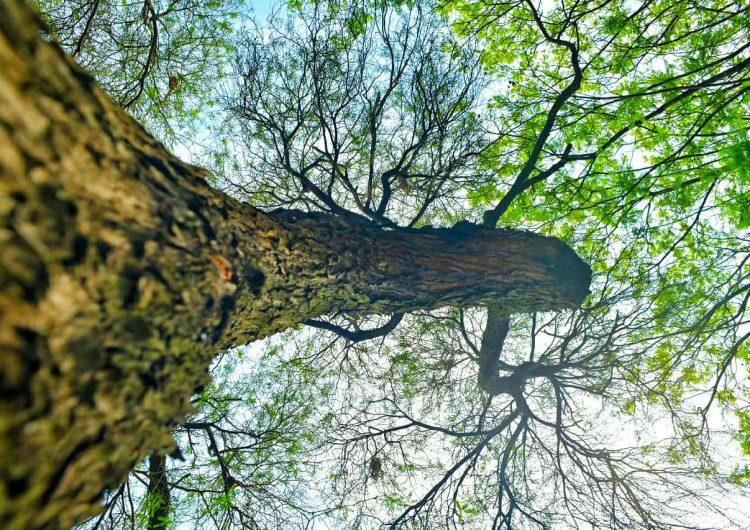 Declaran como área natural protegida 98 hectáreas en Cobos