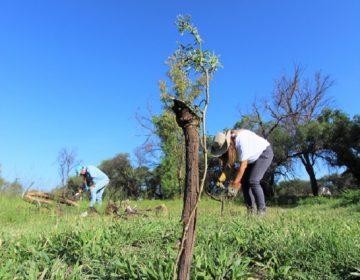 Realizan reforestación en área natural protegida de La Pona