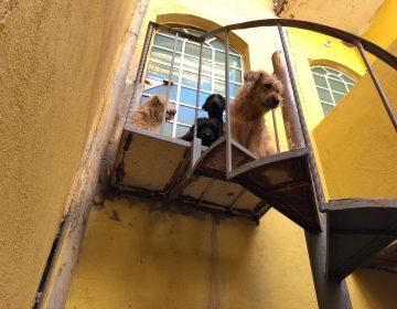 Protestan activistas para exigir sanciones más severas por maltrato animal