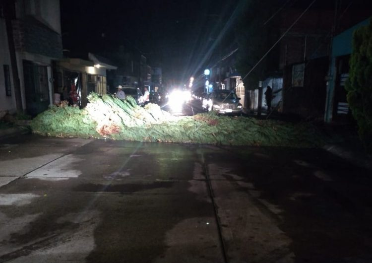 Árboles caídos y el derrumbe de una barda deja lluvia en Aguascalientes