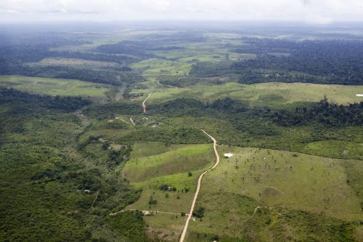 ¿Cuál podría ser el daño a largo plazo de los incendios para la Amazonia?