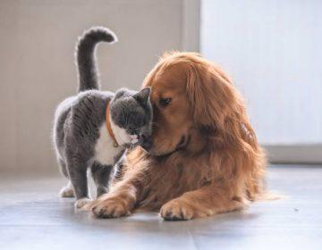 ¿Los gatos son mejores que los perros? La ciencia ya tiene una respuesta