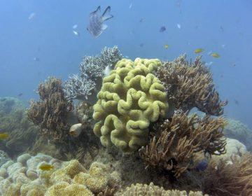 """El gobierno de Australia baja a """"muy mala"""" la condición de la Gran Barrera de Coral"""