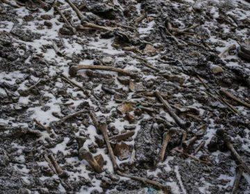 Un lago de esqueletos en India tiene cientos de cuerpos humanos de distintos periodos
