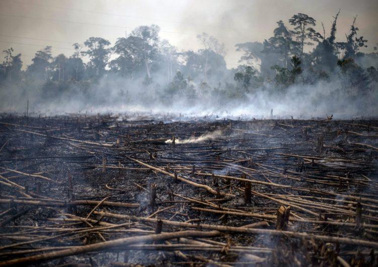 H&M deja de comprar cuero en Brasil por incendios en la Amazonía
