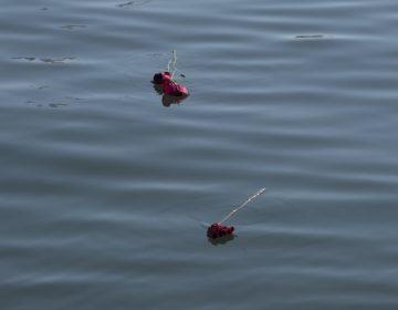 Suspenden búsqueda de los sobrevivientes de un bote incendiado en California tras hallar 20 cuerpos