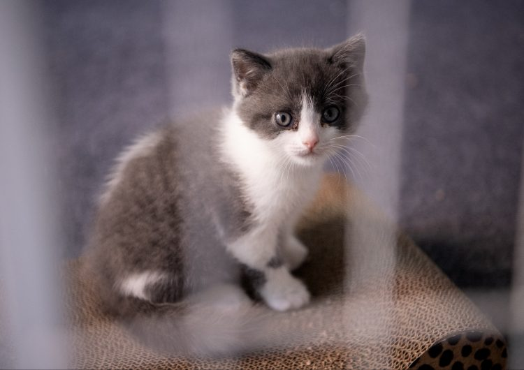 China clona a su primer gato