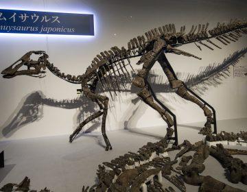 Encontraron una nueva especie de dinosaurio en Japón
