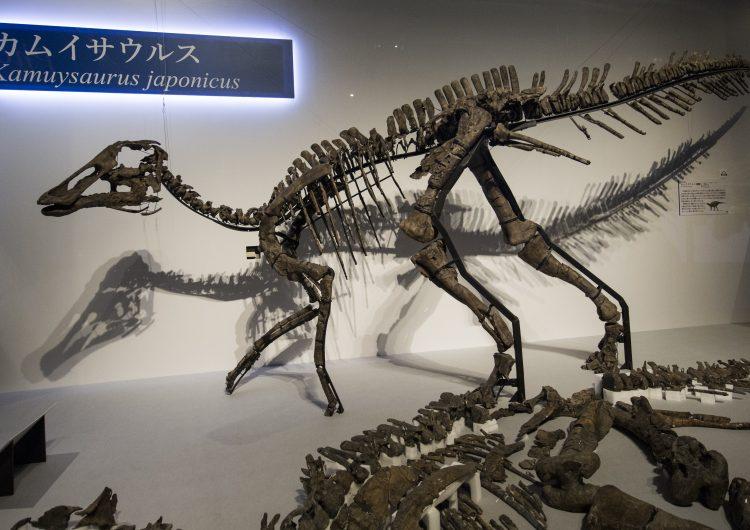 Japón-ciencia-dinosaurios