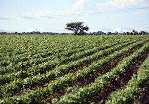 Impactaría recorte federal a 4 mil 500 agroproductores de Aguascalientes