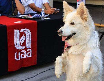 Checa las actividades de la Feria Universitaria de la UAA 2019