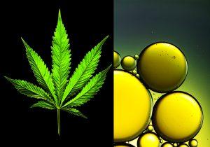 Cannabis: Una droga con mucha publicidad