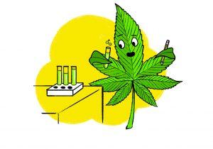 ¿De dónde proviene la controvertida prima de la marihuana?