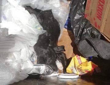 Nuevo caso de brutal maltrato animal en Aguascalientes