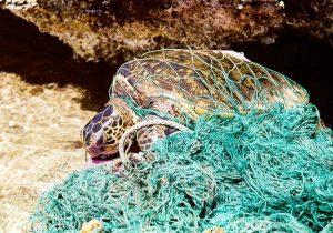14 imágenes que muestran el impacto del plástico en los animales del océano