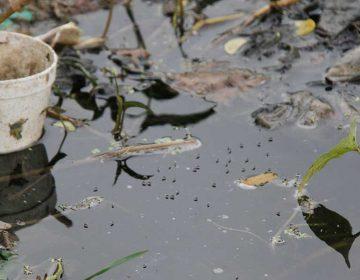En Puebla confirman 760 casos de dengue
