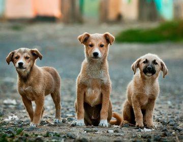 Decenas de perros en Noruega están afectados por una extraña enfermedad