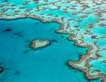 """Hábitats de la Gran Barrera de Coral han """"desaparecido por completo"""" por el cambio climático"""