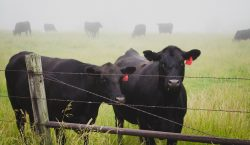 Un rayo en Texas toca barda metálica y causa la…