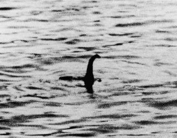 """Científicos anuncian la especie a la que podría pertenecer el """"monstruo del Lago Ness"""""""