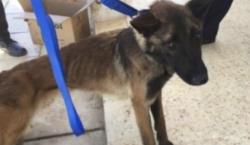 EU envía perros detectores de bombas a Jordania, pero el…