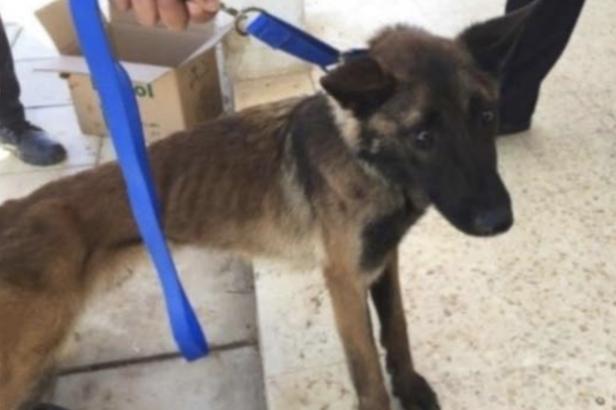 EU envía perros detectores de bombas a Jordania, pero el gobierno los deja morir por malos cuidados