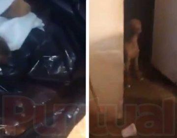 En Puebla, acusan a mujer de robar perros y vender la carne