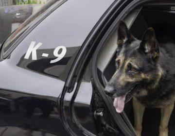 Una niña monta puesto de limonada para comprar chalecos antibalas para perros policías
