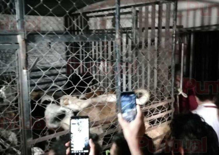 Buscan reformar la Ley de Bienestar Animal