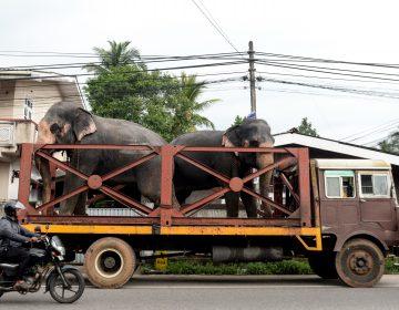Sri Lanka aplicará sanciones severas tras muerte masiva de elefantes