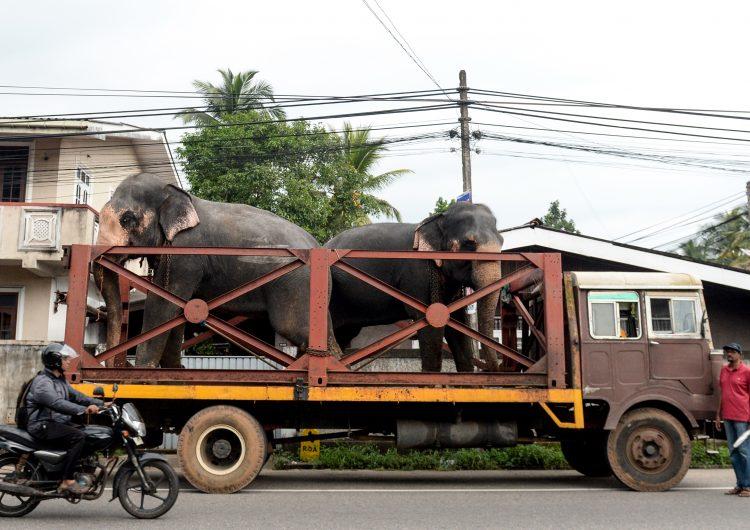 sri lanka-animales-elefantes-maltrato animal