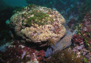 Científicos descubren en el mar Mediterráneo corales que se creían muertos por la crisis climática