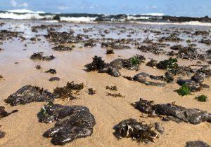 Manchas de petróleo llegan a las playas turísticas más importantes de Brasil