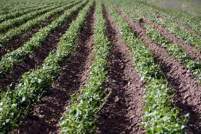 Trabajan el campo de Aguascalientes campesinos del sureste del país