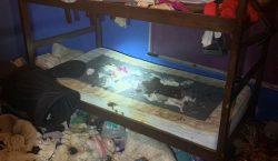 Entre comida podrida y desechos: Rescatan a tres niñas y…
