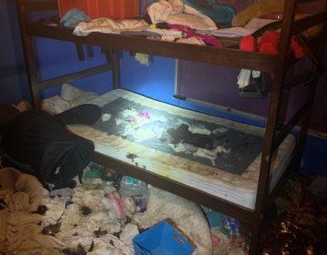 Entre comida podrida y desechos: Rescatan a tres niñas y 245 animales de una casa de EU