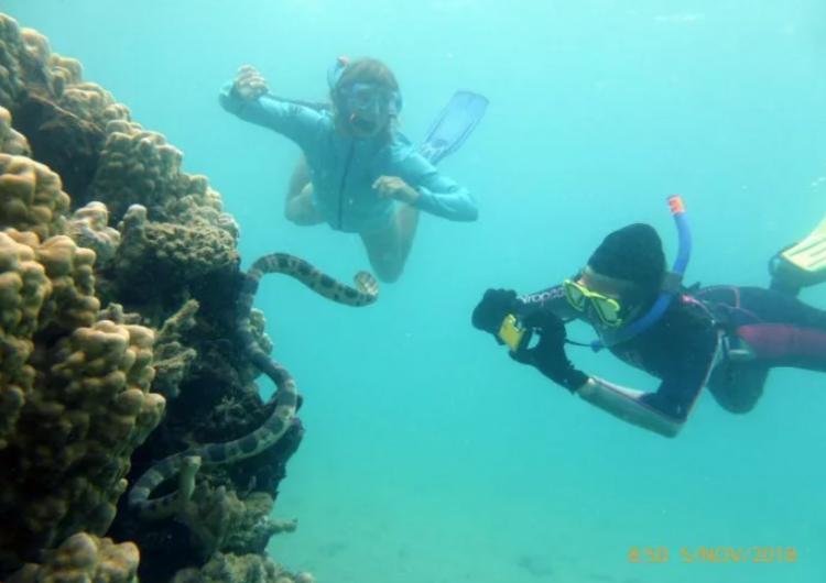 Unas abuelas que hacían snorkel hallaron numerosas serpientes marinas venenosas