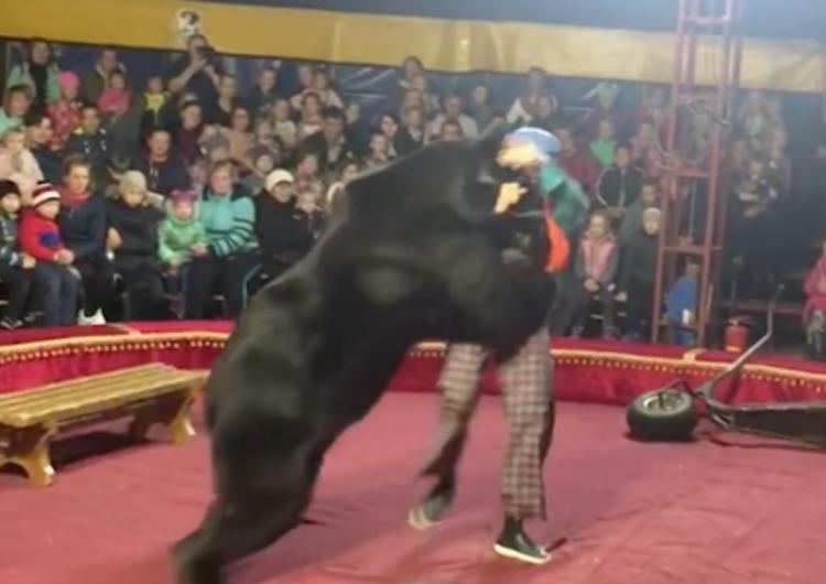 Entrenador de circo es atacado por un enorme oso pardo