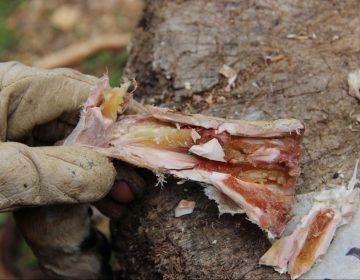 Humanos comían médula ósea como sopa en conserva hace 400,000 años