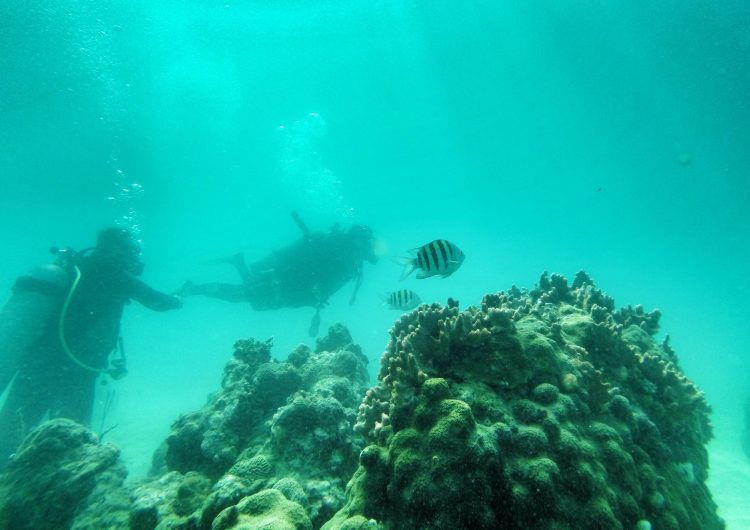 oceanos ecosistemas