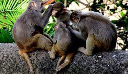 """PETA busca modificar la definición de """"animal"""" en el diccionario"""