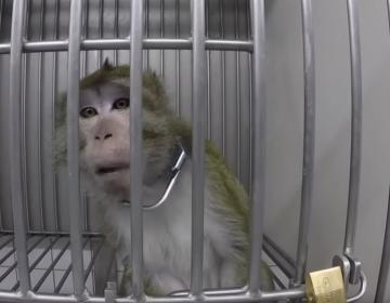 Grabación encubierta revela maltrato animal en laboratorio de Alemania