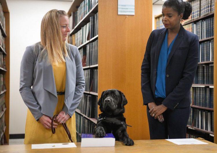 """Fiscal de EU """"contrata"""" a un perro para apoyar a niños víctimas de abuso sexual"""
